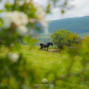 Casale Natura e Cavallo